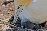 Oiseaux Pélagiques