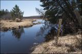 Minnesota Wetland in Spring