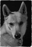 This Weeks Dog Portrait