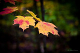 a_look_at_leaves