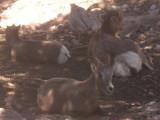 Animals at Royal Gorge