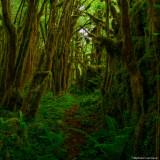 Petite Amazonie