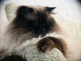 5538-cats.jpg