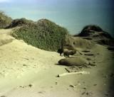 Año Nuevo State Park 1976