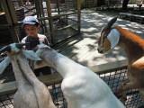 More damn goats!