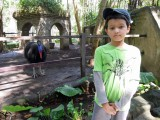 With a cassowary