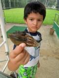 Found a big snail!