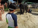 Beach elephant