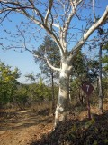 Tree in Panna reserve