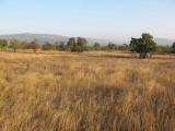 Panna grasslands