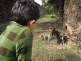 Puppy hunt at Humayan's tomb