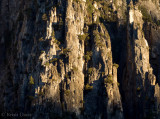 Trees clinging to the granite cliffs in the morning light.