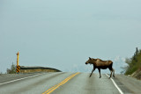 Frost heaves and pot holes aren't the only road hazards