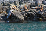 Sea lions are very good climbers