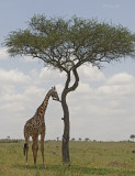 Best of Animals and Landscapes