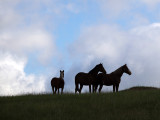 Mustangs Silhouettes