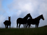 Three Silhouettes on the Hill-Mustangs_