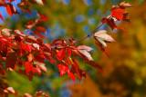 A Kentucky Fall