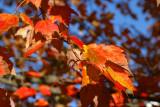 Last Days of Fall 2014