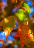 One Leaf Won't Let Go of Summer