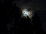 Full Moon in the Forest