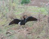 Birds of Eastern Australia