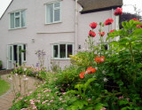 A corner of Dinah's back garden
