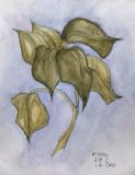 Seven leaves