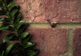 Tiny Snail on the brick highway