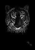 Grumpy Old Tiger