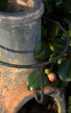 Chimnea with Camellia