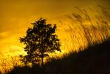 Sunset at Mount Pisgah Arboretum