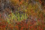 California dry brush II