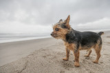 Leo surveying the territory at Leo Carillo State Beach