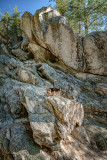 The fearless Leo climbing rocks at Idyllwild, CA