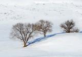 snowy-DSC_0369-2.jpg