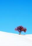 snowy-DSC_0254.jpg