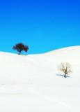 snowy-DSC_0255.jpg