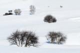 snowy-DSC_0417.jpg