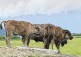 10 Alaska Conservation Centre  (4).jpg