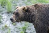 10 Alaska Conservation Centre  (5).jpg