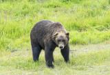 10 Alaska Conservation Centre  (6).jpg
