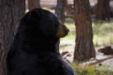 Bearizona Wildlife Park, AZ
