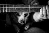 Dog and Twang.jpg