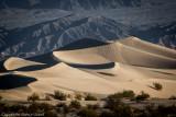Desert Life:  restoration through sparseness ...