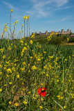 Monteriggioni  14_d800_2028