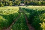 View near Monteriggioni  14_d800_2095