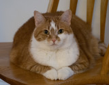 _7020065 I am not fat