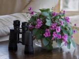 P3210012 flowers and binoculars