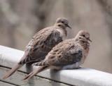 P4090126 Love is in the air (or on my deck to be more exact)